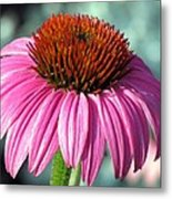 Flower Garden 50 Metal Print