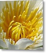 Flower Garden 68 Metal Print