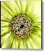 Flower Green Metal Print
