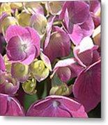 Flower-hydrangea Pink Metal Print