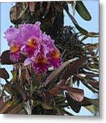 Flower In A Tree Metal Print