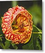 Flower In Red And Yellow  Metal Print