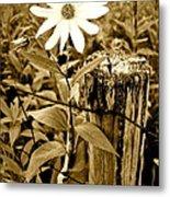 Flower In Sepia Metal Print