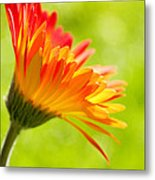 Flower In The Sunshine - Orange Green Metal Print by Natalie Kinnear