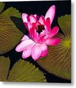 Flower In Water Metal Print