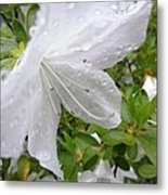 Flower Laced With Rain Drops Metal Print