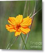 Flower Lit By The Sun's Rays Metal Print