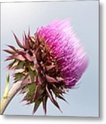 Flower Massage Metal Print