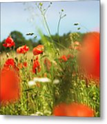 Flower Meadow In Summer With Red Poppy Metal Print