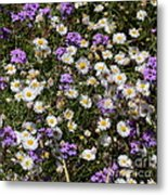 Flower Mix - Purple And White Metal Print