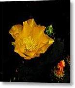 Flower Of The Desert Metal Print