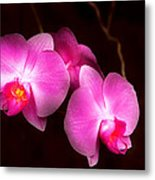 Flower - Orchid - Better In A Set Metal Print
