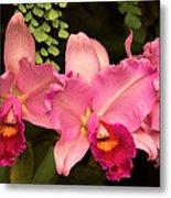 Flower - Orchid -  Cattleya - Magenta Splendor Metal Print