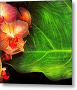 Flower - Orchid - Phalaenopsis Orchids At Rest Metal Print