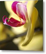 Flower-orchid-yellow Metal Print