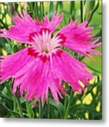 Flower Pink Metal Print