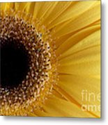 Flower Power All Profits Go To Hospice Of The Calumet Area Metal Print