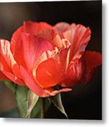 Flower-tri Toned-rose Metal Print