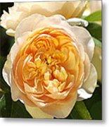 Flower-yellow Roses Metal Print