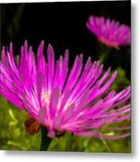 Flower1 Metal Print
