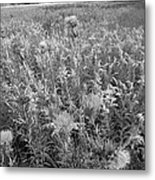 Flowered Field Metal Print