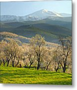Flowering Almond At The Mountains Metal Print