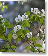 Flowering Branches Metal Print