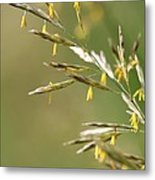 Flowering Brome Grass Metal Print