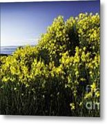 Flowering Bush Metal Print