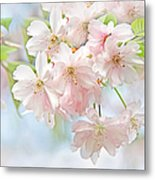 Flowering Cherry Tree Blossoms Metal Print