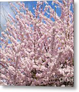 Flowering Cherry Tree Metal Print