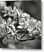 Flowering Crabapple 2 Bw Metal Print