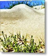 Flowering Dunes - Outer Banks Metal Print by Dan Carmichael