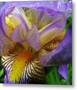 Flowering Iris Metal Print