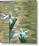 Flowering Pond Plant Metal Print