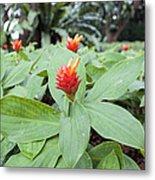 Flowering Red Ginger Plant Metal Print
