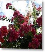 Flowering Skyward Metal Print