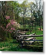 Flowering Trees In Bloom Along Fence Metal Print