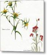 Flowers 1950 Metal Print
