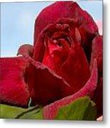 Flowers 459 Metal Print