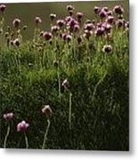 Flowers Above The Beach Metal Print