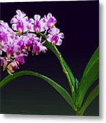 Flowers - Aerides Lawrenciae X Odorata Orchid Metal Print