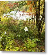 Flowers Along The River In Fall Metal Print