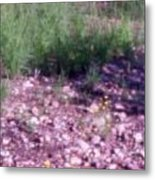 Flowers And Gravel Metal Print