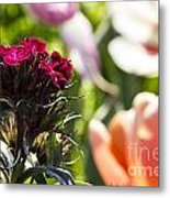 Flowers At Dallas Arboretum V13 Metal Print