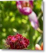 Flowers At Dallas Arboretum V14 Metal Print