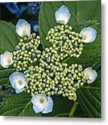 Flowers At Soos Creek Botanical Garden II Metal Print