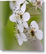 Flowers - Blossoms Metal Print