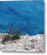 Flowers By The Blue Metal Print