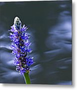Flowers By The Water Metal Print